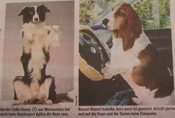 Hundes-001.jpg