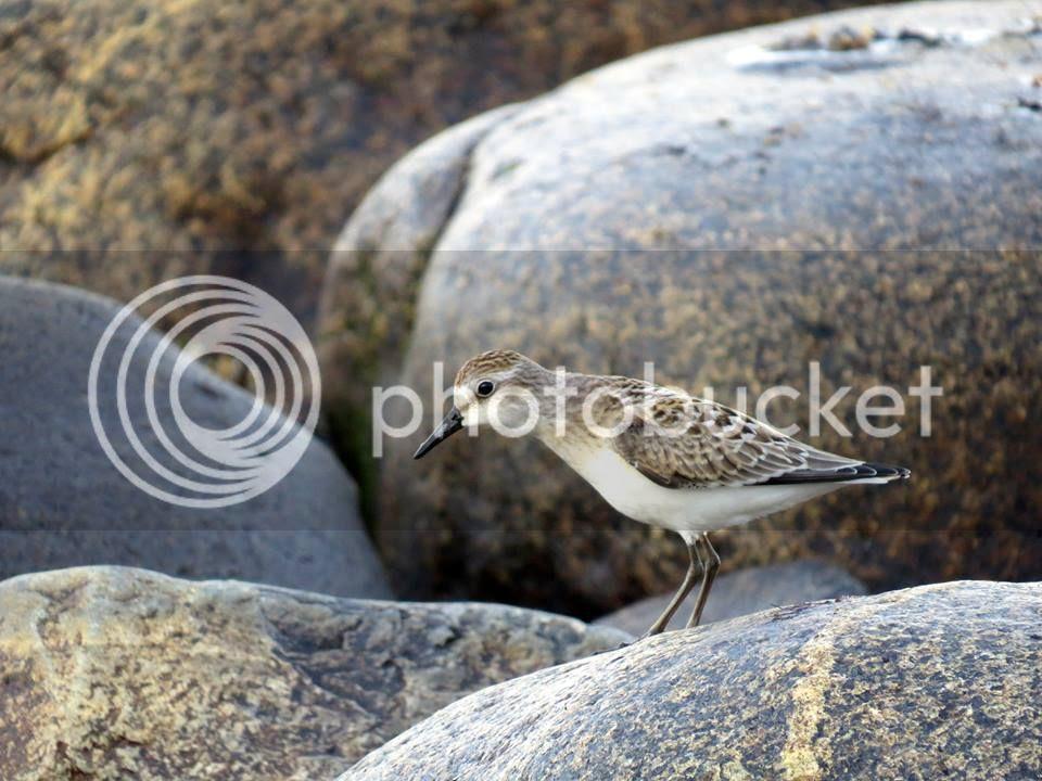 photo birdRocks.jpg