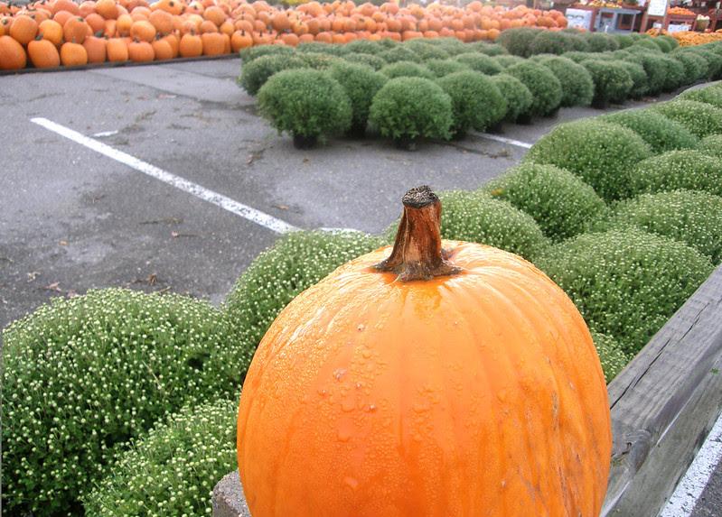 King pumpkin