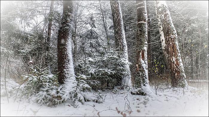 Первый снегопад/3673959_5 (700x393, 135Kb)