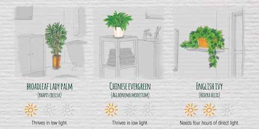 FINALLY: A Cheat Sheet That's Going to Save All of Your Houseplants