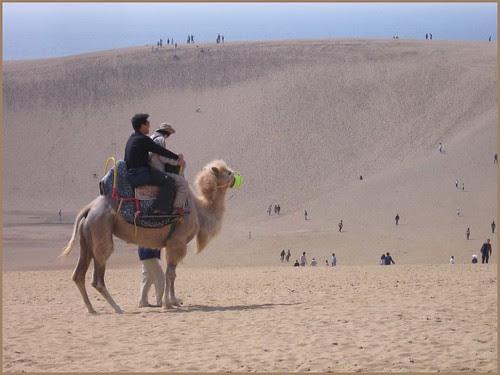 15 camel ride
