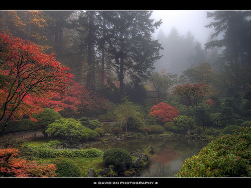 One Foggy Fall Morning at Portland Japanese Garden by David Gn Photography