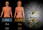¿Cómo resolver problemas de genética?