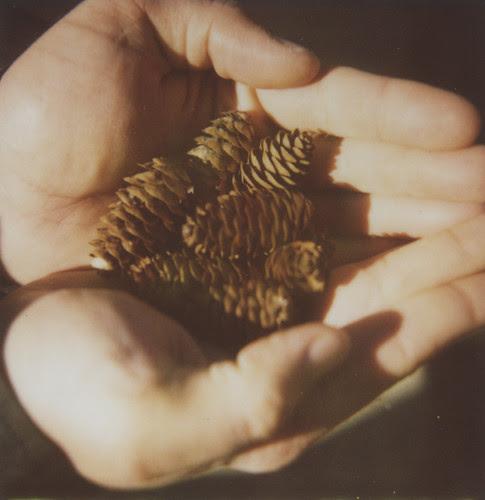 2010_pinecones_001