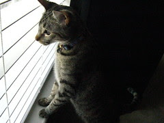 Maggie spying out the window