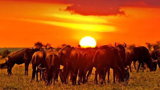 Experience the Great Migration on an exhilarating ##TanzaniaMigrationSafari h...