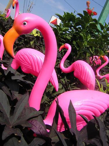 pink flamingos — aug 23 by theogeo