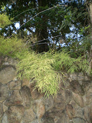 Da rigidez do muro à leveza das folhas