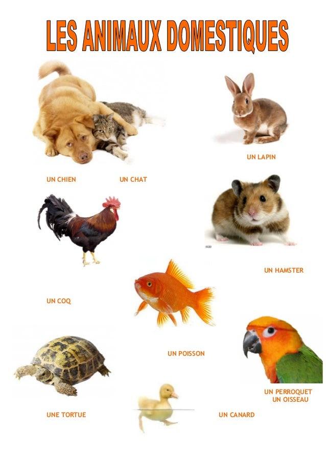 Zwierzęta - zwierzęta domowe 2 - Francuski przy kawie