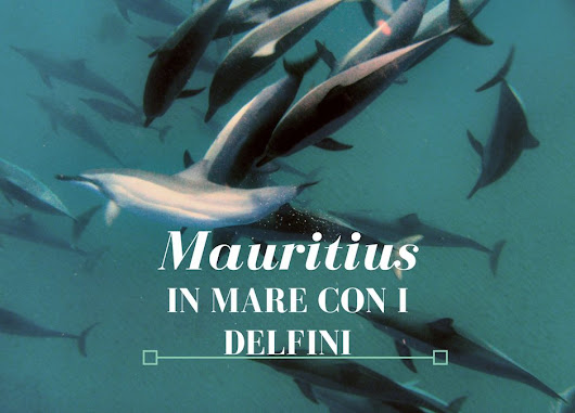 Mauritius: in mare con i delfini- Chicks and trips
