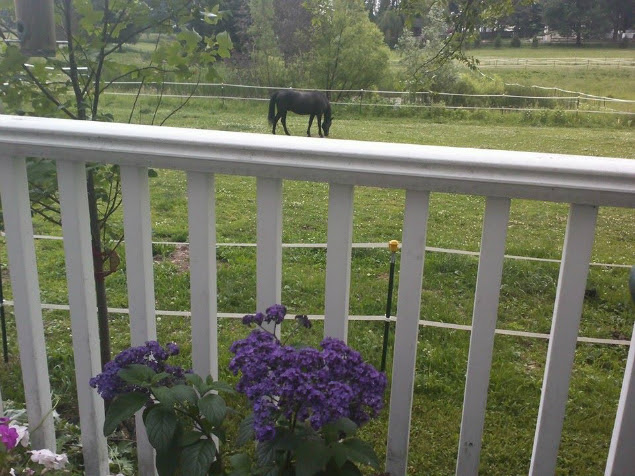 Little Horse on a Big Rail