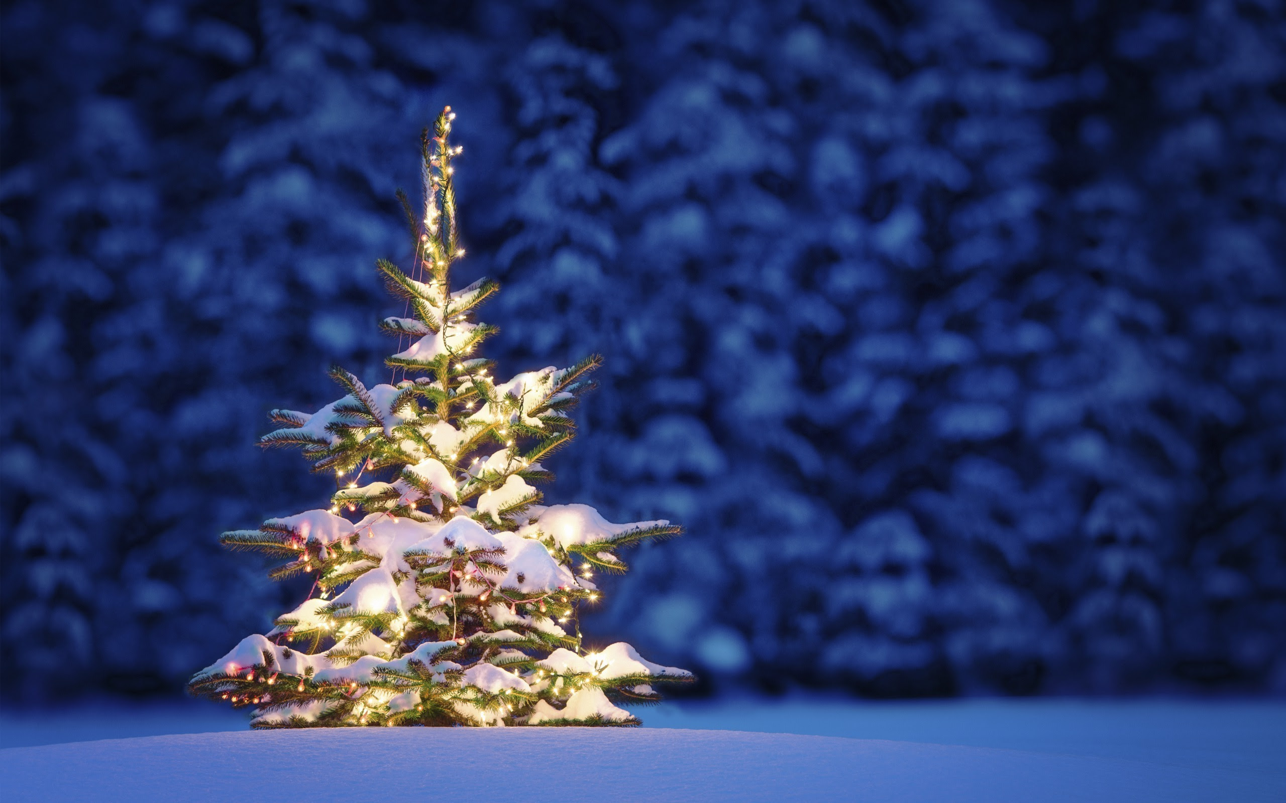 Christmas Tree Snow Wallpaper Sf Wallpaper