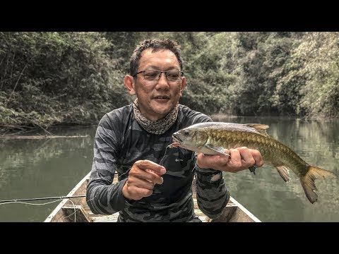 Fly Fishing for Thai Mahseer From A Boat