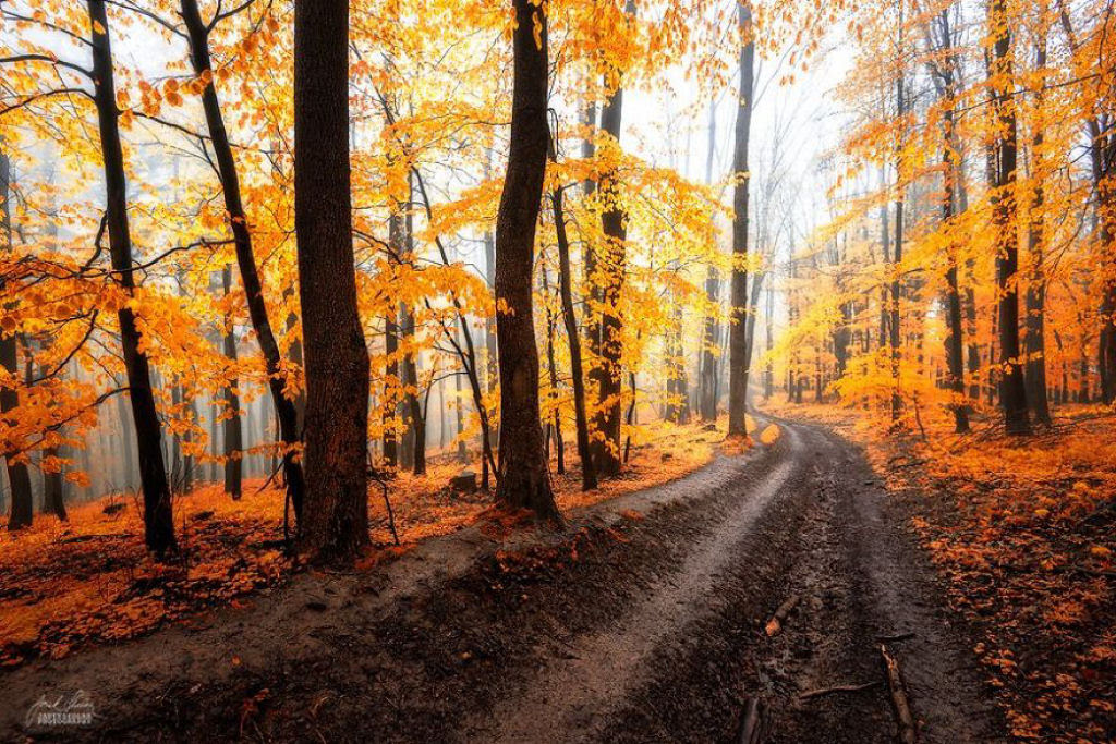 Os bosques outonais oníricos de um fotógrafo tcheco 14