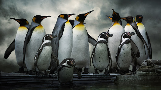 For The Holidays, Google Breaks Its No Updates Rules, Gives Out Fresh Penguin Updates