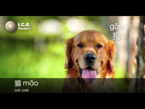 "How to Say ""Dog"" and Train Your Dog in Chinese?"