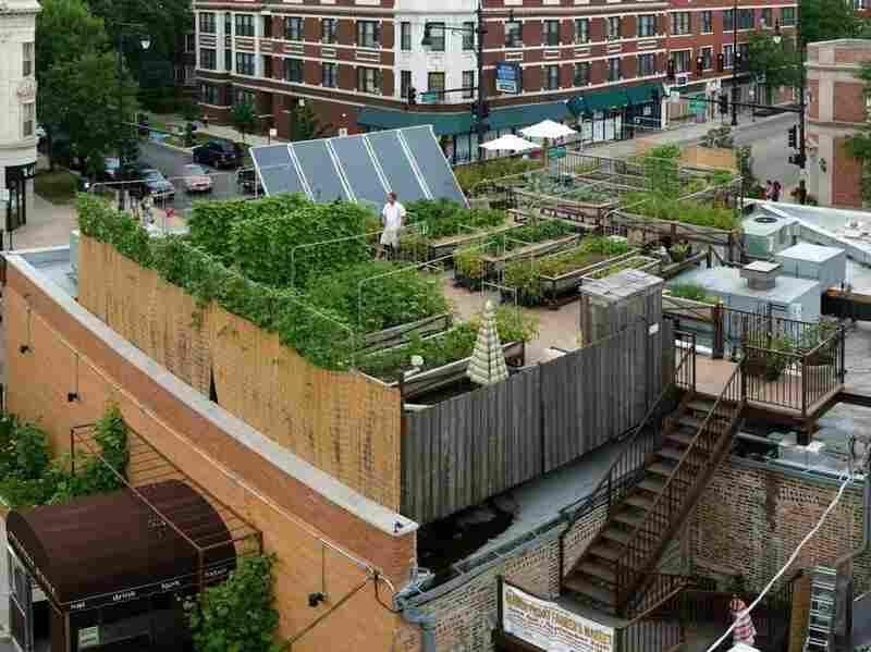 Windy City Harvest An Urban Agriculture Entrepreneurship