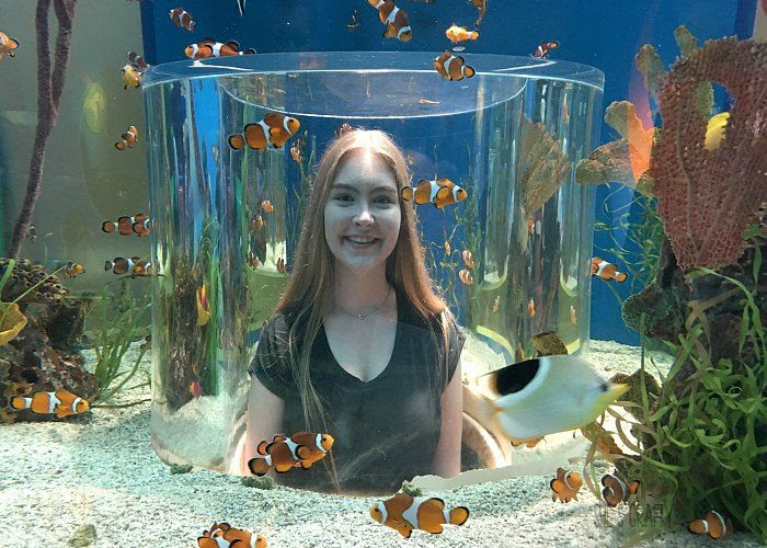 aquarium, clown fish, fish tank, family fun activities in gatlinburg