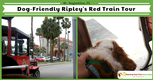 Dog-Friendly Florida Vacations-Traveling with Dogs in St. Augustine, Florida-Red Train Tour Overview ~ Raising Your Pets Naturally with Tonya Wilhelm