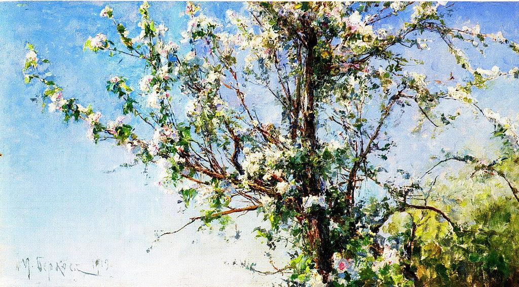 Apple tree in bloom.jpg
