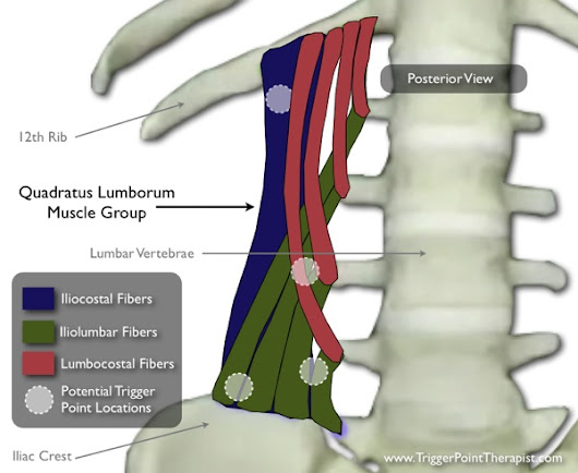 Quadratus Lumborum Trigger Points: Masters of Low Back Pain | TriggerPointTherapist.com