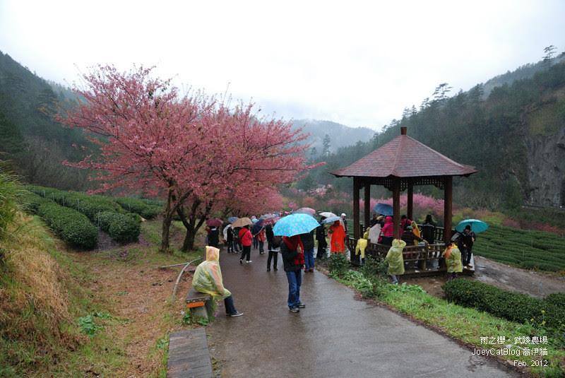 2012_0227_雨之櫻。武陵農場DSC_4366_29