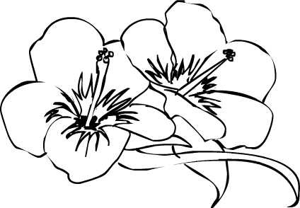 Free Hibiscus Flower Outline Download Free Clip Art Free Clip Art On Clipart Library