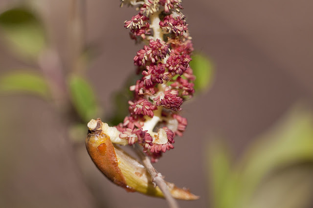 catkin new-old