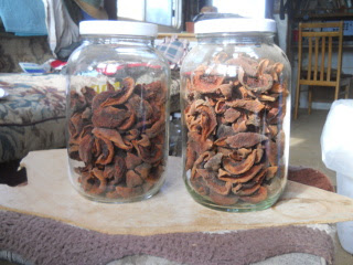 Dried Nectarines Stored in Jars
