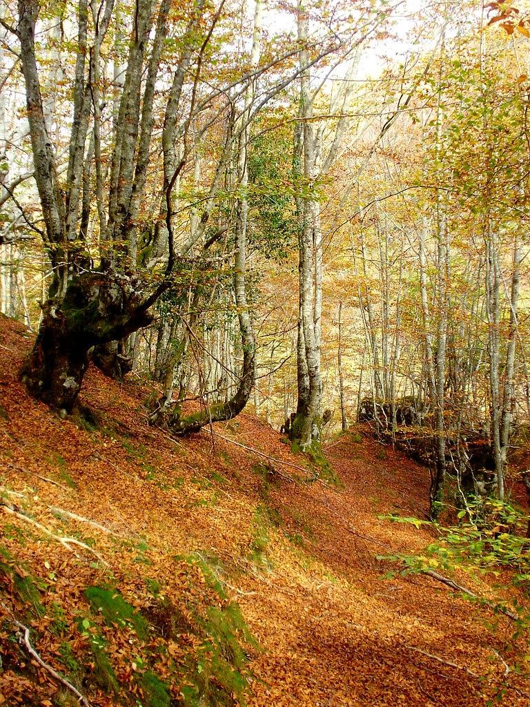 Bosque de Lindes 027