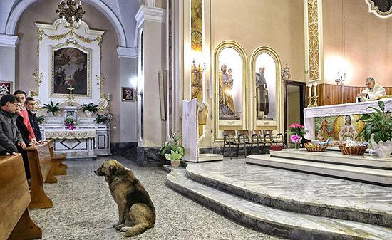 Cão Tommy participa de missa em igreja na Itália