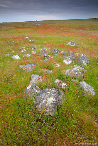 Prairie in Summer, San Juan Island National Historical Park, Washington