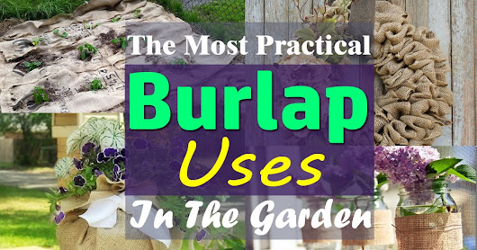 Burlap For Plants: 15 Practical Burlap Uses In The Garden | Balcony Garden Web