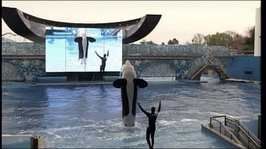 "Amid ""Blackfish"" controversy, SeaWorld beats on earnings"