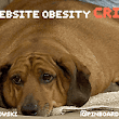 The Website Obesity Crisis