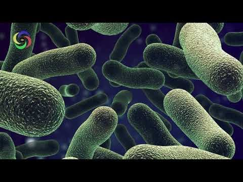 Music For Bacterial Infection 778 Hz To Heal and Retreat Yourself #RMBB