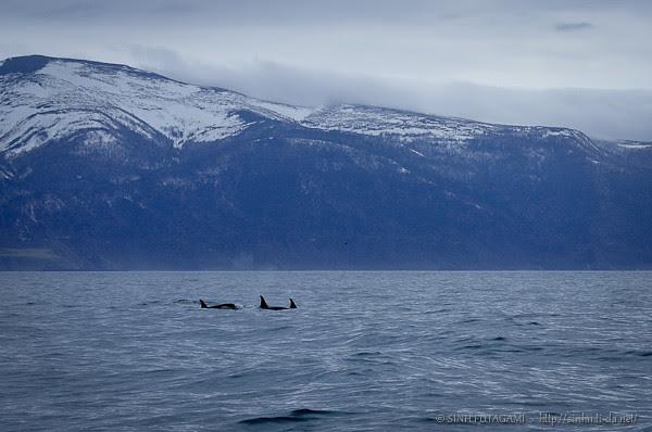 20130524-DSC_9519-orcas