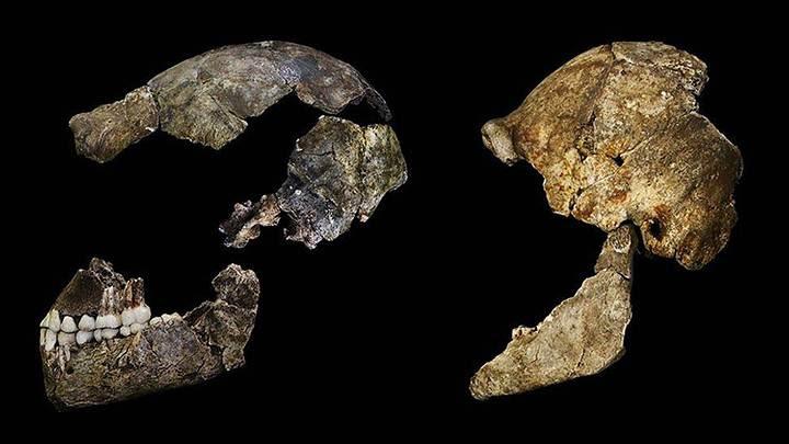 Vista lateral del cráneo de un 'Homo naledi'. Crédito: John Hawks, Wits University.