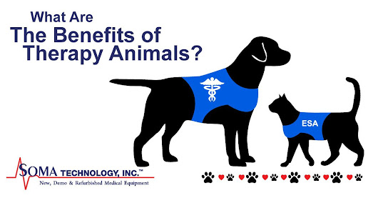 Tuesday Thoughts: What Are The Benefits of Therapy Animals? - Soma Technology, Inc's Blog
