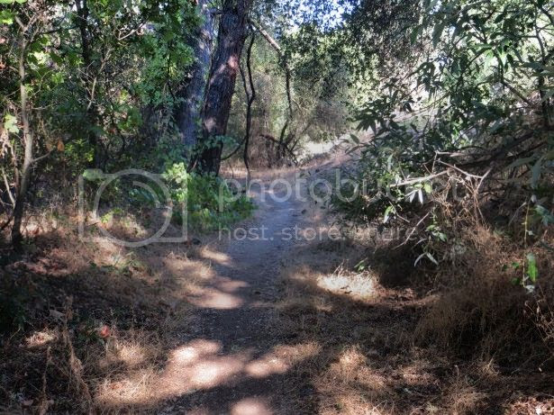 photo path-in-woods-84_zps5d1dbc0a.jpg