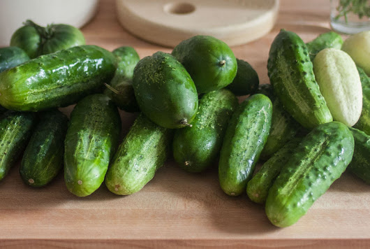 Pickle Log: Fermenting the last of our garden's cucumbers into kosher dill pickles - Kirby & Kraut