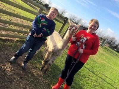 Walking Amadeus and Cosmic at West Wight Alpacas, Isle of Wight