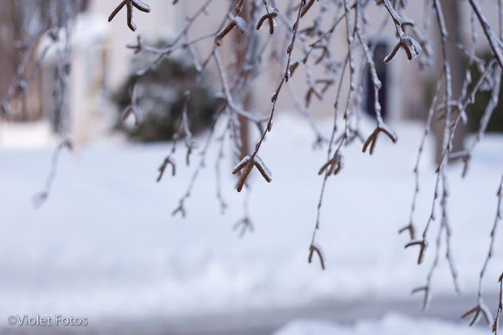 Winter_110203-2