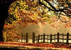 Flickr: Autumn Morning at Caldicot Castle Park