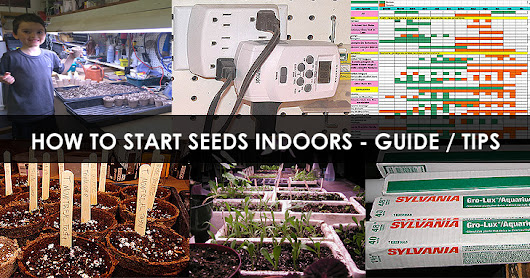 How to Start Seeds Indoors - Best Tips for Starting Seeds