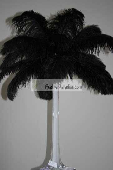 Feather Plume Palm Tree Black Ostrich Feather Plumes