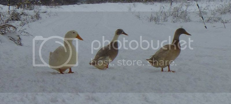 DUCK DUCK DUCK! Ellie, Tina and Ike.