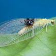 New insect species identified through Flickr