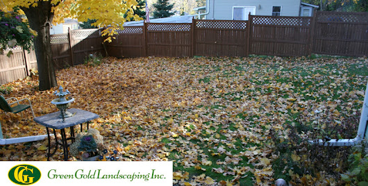 How to do a Complete Backyard Cleanup? - Green Gold Landscaping Inc